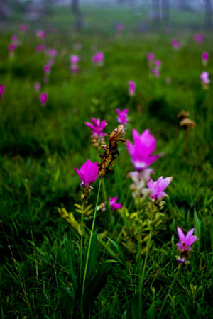 Amid blooming flowers wither in thailand Stock Photo - 7396105