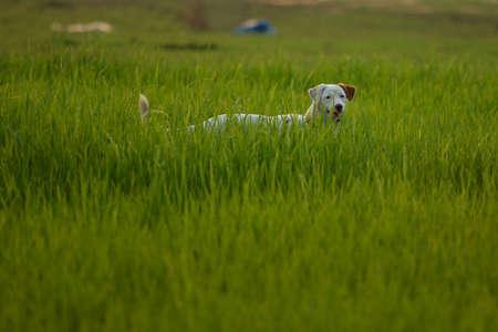 la naturaleza del perro photo