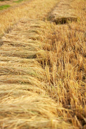 Fields to harvest. photo