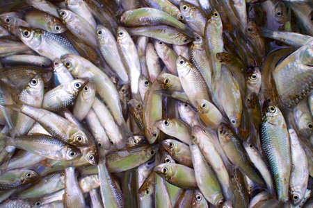 fisheries: Fish aquaculture fisheries Stock Photo