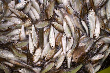 fischerei: Fisch Aquakultur Fischerei