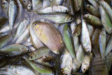pesquero: Fish pesca acuicultura