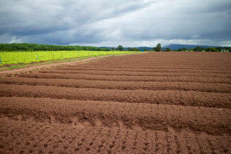 Vegetable farming.