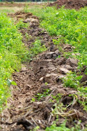 furrow: Furrow soil. Stock Photo