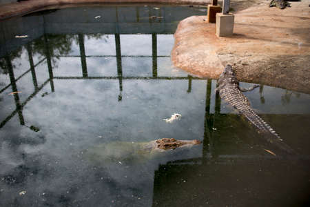 Crocodile farms. photo