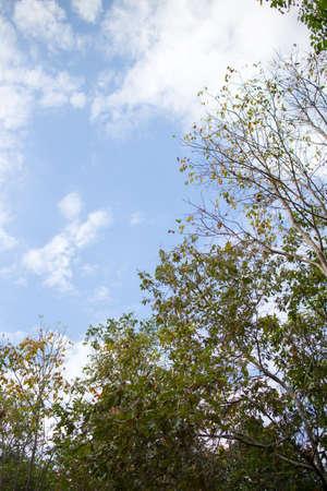 Sky and treetops photo