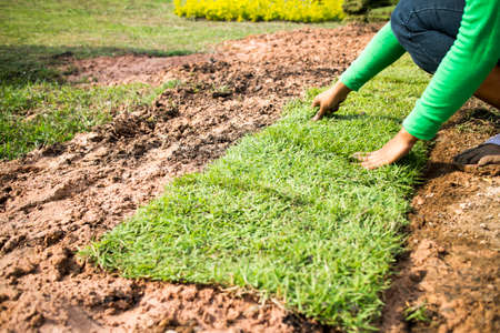 lawn care: Landscaping lawn