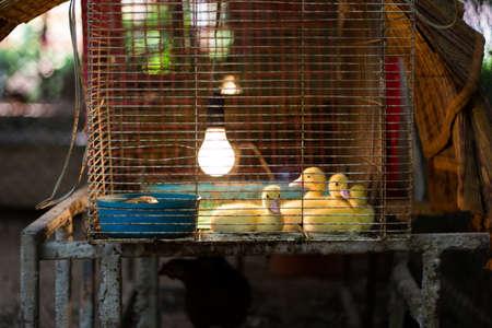 Duck farm photo