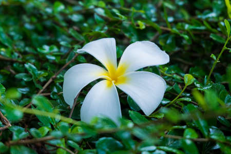 spa flower photo