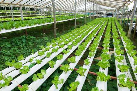 Growing vegetables without soil