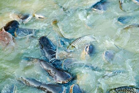 fish farming: El cultivo de peces