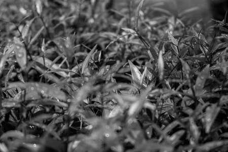 shoots: Brotes foliares