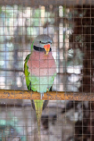 captivity: Parrot in a cage