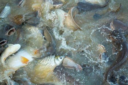 fish farming: Fish farming