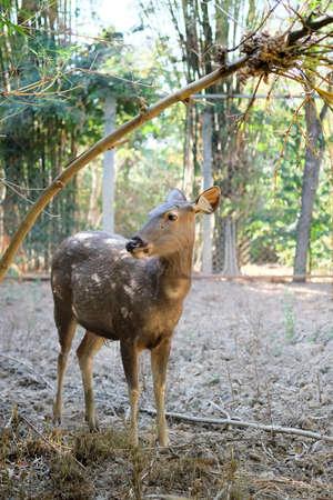 Deer in cage Stock Photo