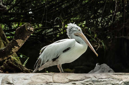 pelican resting in green jungle