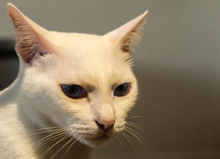 cute white cat face closeup Stock Photo
