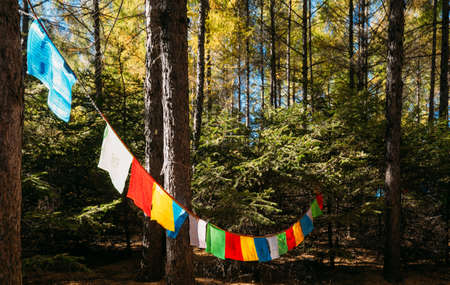 Colorful prayer flags hanging in forest trees Imagens