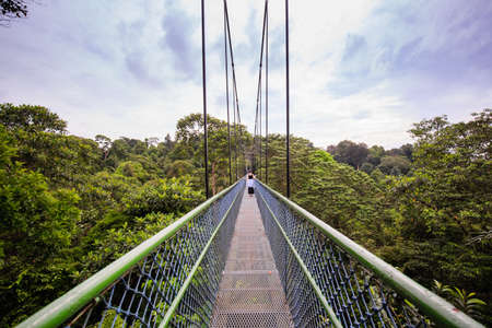 people Walking over the trees through a tree top walk in Singapore Stock fotó