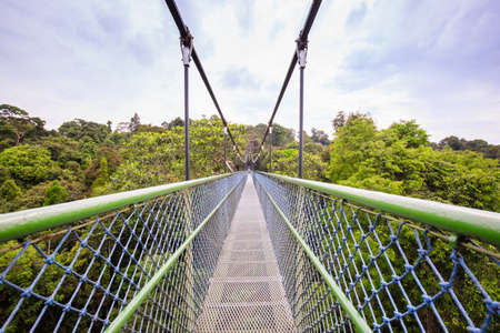 Walking over the trees through a tree top walk in Singapore Stock Photo