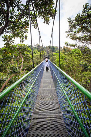 people Walking over the trees through a tree top walk in Singapore Stock Photo