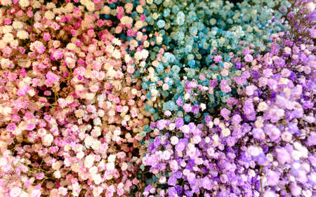 multiple colored gypsophila to bring a bouquet together