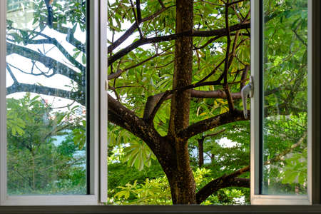 Window with a beautiful tropical tree view
