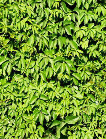 green background: background green fence Stock Photo
