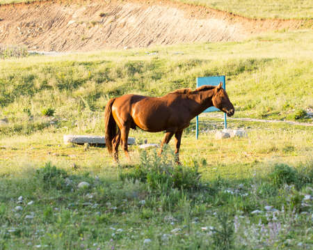 resent: Wild horses in a nature reserve. The horses belonging to a local farm. The farm is closed. Horses are walking by themselves