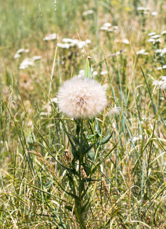 wild grass: wild grass in nature Stock Photo