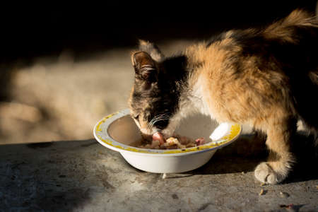 wild cat: wild cat eats on the streets