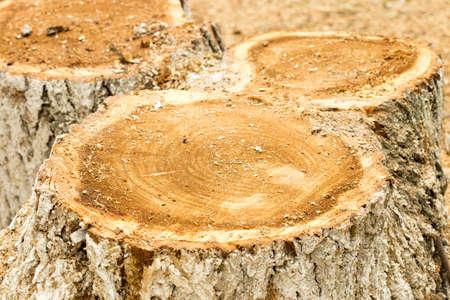 deforestacion: tree stub, deforestation.