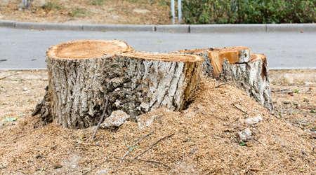 deforestacion: trozo del árbol, la deforestación.