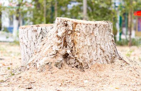 deforestacion: trozo del �rbol, la deforestaci�n.