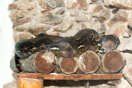 studio zoo: Snake in the zoo Stock Photo
