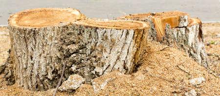deforestation: tree stub, deforestation.