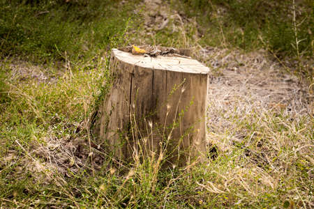 stumped: Tree stump in the park. Shape of the heart.