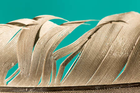 feathers macro on a green background