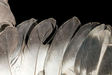 weightless: feathers isolated on black background