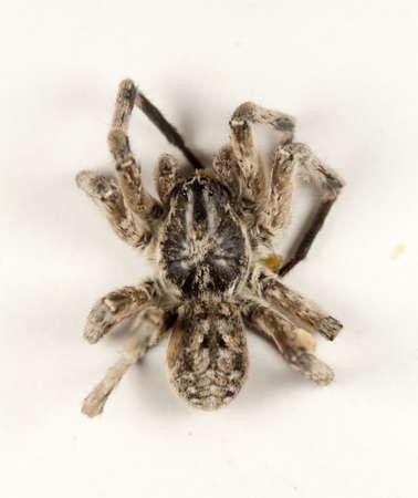spider on white