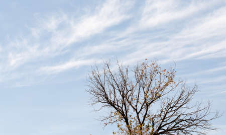 Branches of tree against clear blue sky Stock Photo