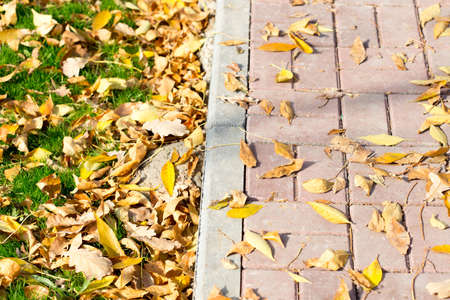 Autumn Leaves by the Sidewalk