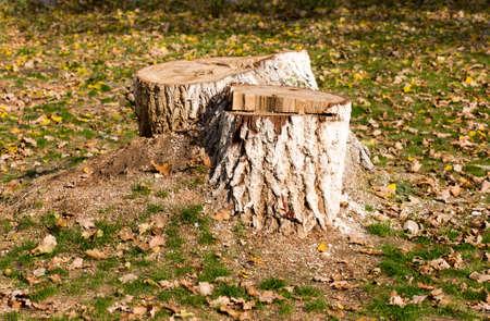 Stump, background, grass in autumn Фото со стока
