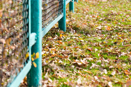 background of autumn leaves at the chain-link fence. colorful fall leaves are illuminated by sunlight and lying at the fence Stock Photo