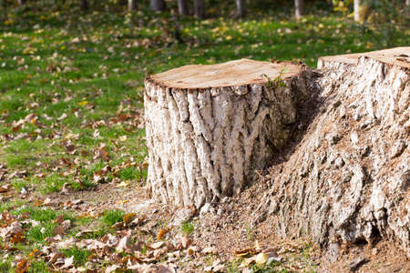 Stump, background, grass in autumn Фото со стока - 83437234
