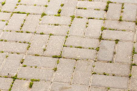 bestrating tegels in scheuren groeien groen gras