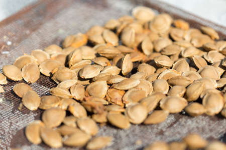 Dry fruit kernel of apricot to dry under the sun 스톡 콘텐츠