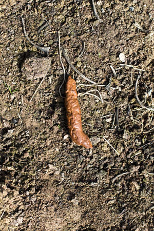 Human feces in the garden