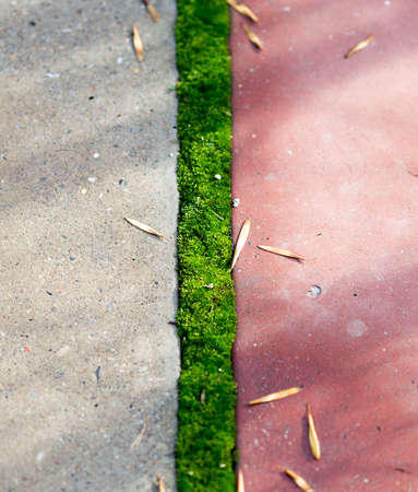 rectangle: Grass grows on the paving slabs