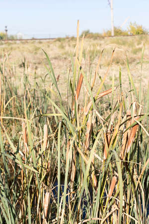 plant reeds on a creek Stock Photo